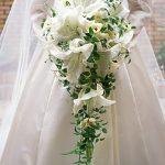 beyaz zambaklı gelin çiçegi