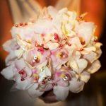 gelin çiçekleri orkideler