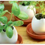 yumurta figürlü saksı modeli